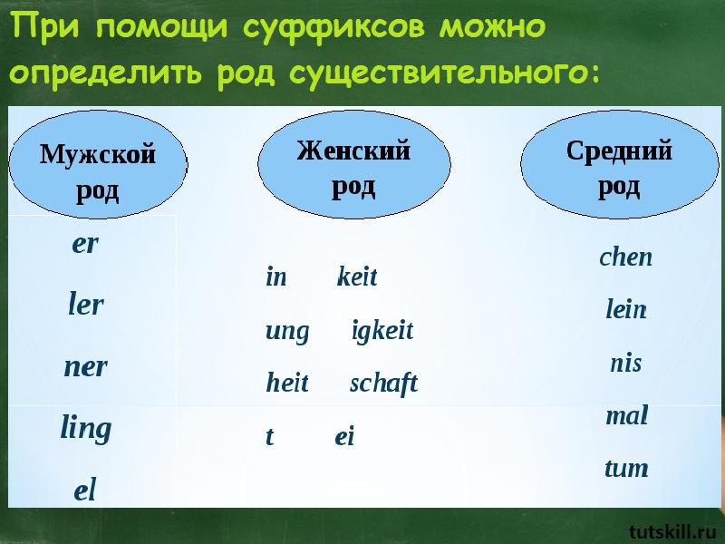 Структура иностранных существительных